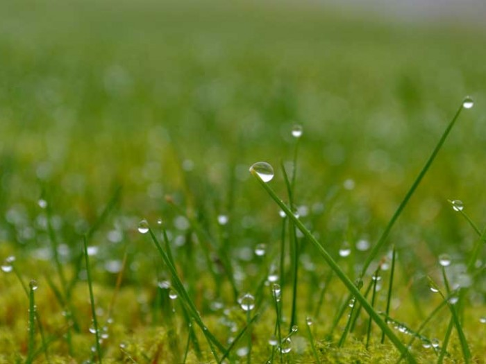 water dew drops in the grass