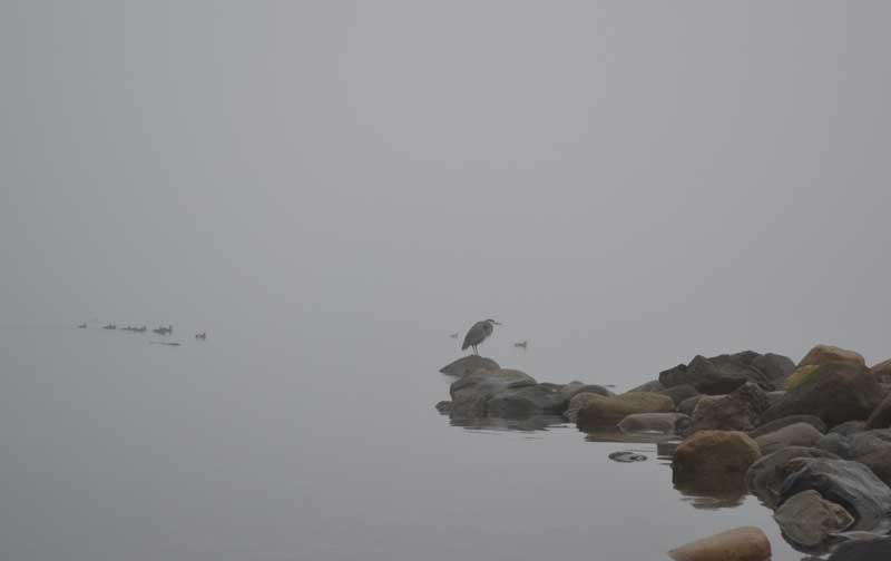 heron on a rock in the ocean
